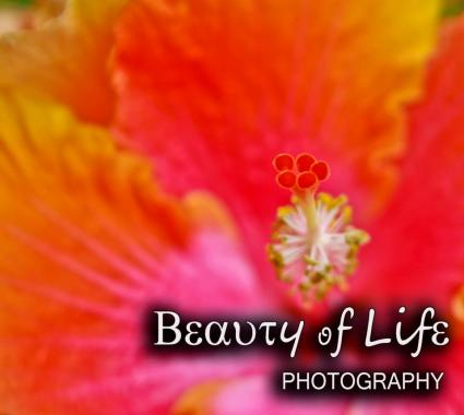 Beauty of Life Photography